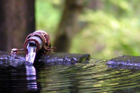 Suministro alternativo de agua para grupos